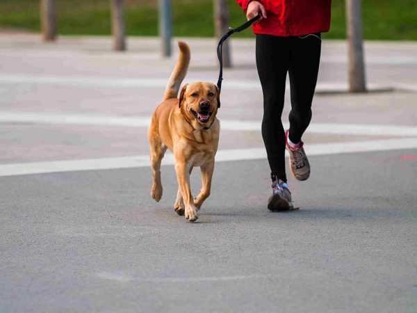 Τζόκινγκ ή τρέξιμο είναι πιο ασφαλές για τους σκύλους;
