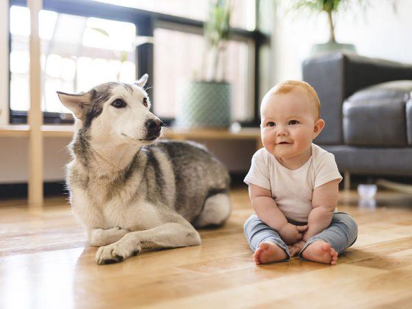 Πως να γνωρίσετε το μωρό με τον σκύλο σας;