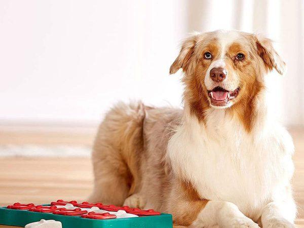 Παιχνίδια για τον σκύλο όταν βρίσκεται μόνος στο σπίτι!