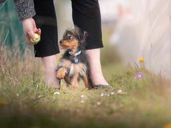 Πότε μπορεί να βγεί βόλτα ένα κουτάβι;