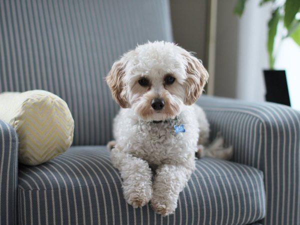 Σκύλος μόνος στο σπίτι: Τι πρέπει να κάνω;