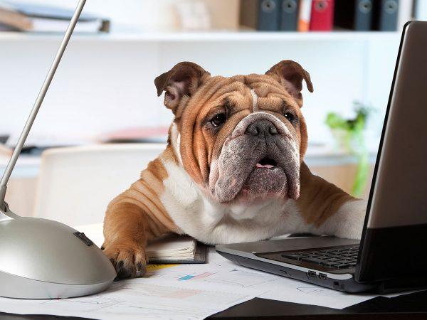 Σκύλος στη Δουλειά: Θα μπορούσες να είναι μαζί σου;