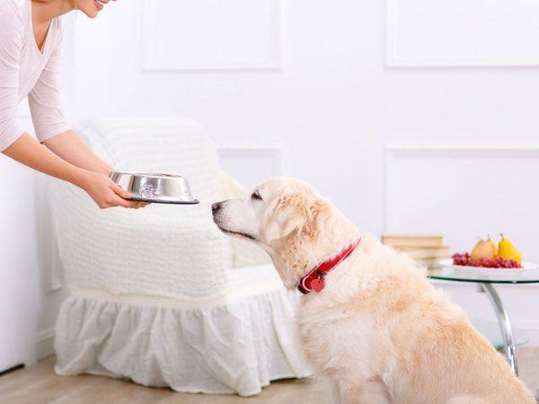 Τάισμα σκύλου: Καλύτερα πριν ή μετά την βόλτα;
