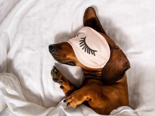 Πόσες ώρες κοιμούνται οι σκύλοι;